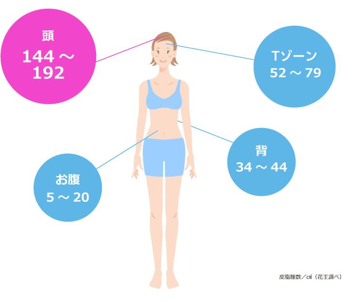 頭皮の皮脂腺数